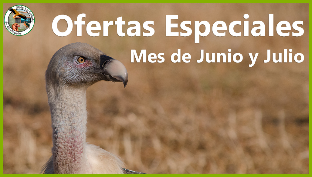 Oferta Especial Mes de Junio y Julio